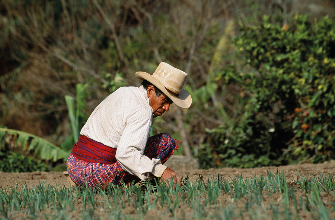 Kaqchikel farmer tending to his crops. Credit: Latitude Stock.