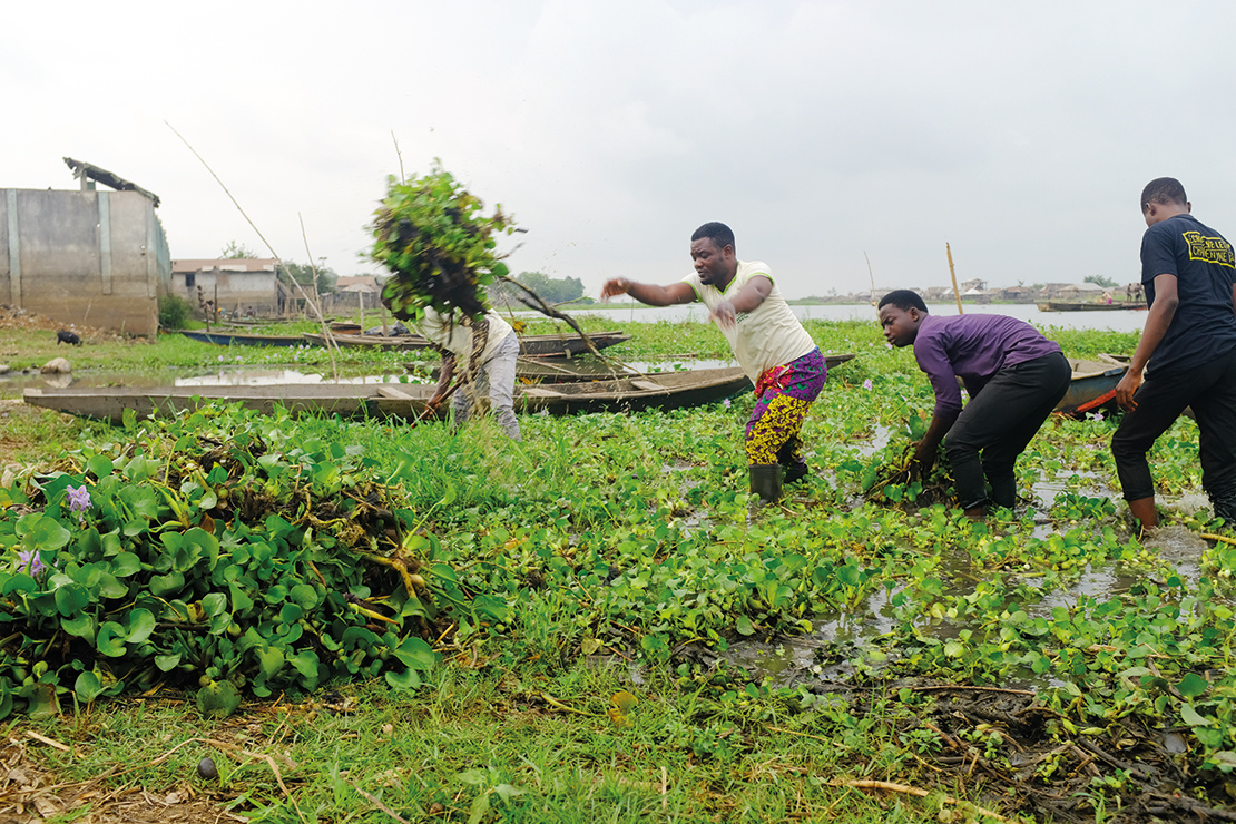 Clearing water hyacinth from the lake. Credit: © Sébastien Roux/Reporterre.