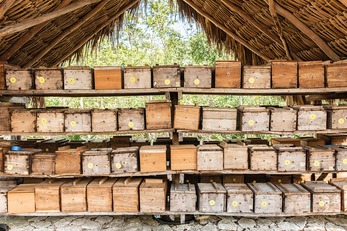 Beehives in a Mayan community in Mexico. Credit: Alessandro Banchelli.